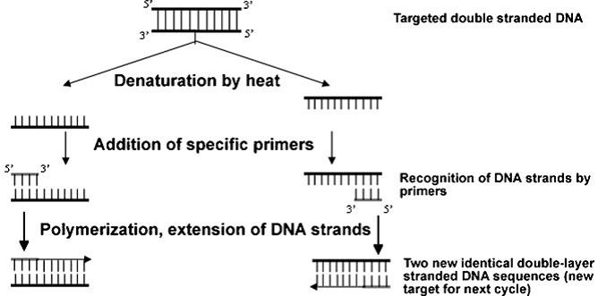sgugenetics / Methods of Pathogen identification using molecular ...