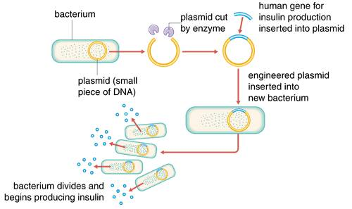 describe how bacteria decode its genetic information to produce proteins essay