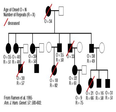 Sgugenetics Genetic Aspect Of Huntington S Disease